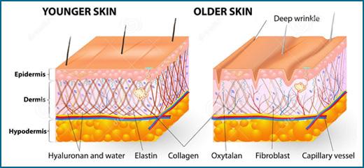Cambios en la piel por envejecimiento: causas y consecuenciaspiel ...