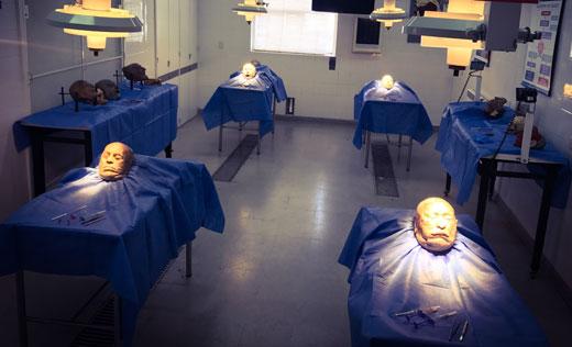 Curso internacional de anatomía aplicada en cadáveres enfocado en estética